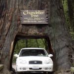 Redwood_Chandelier