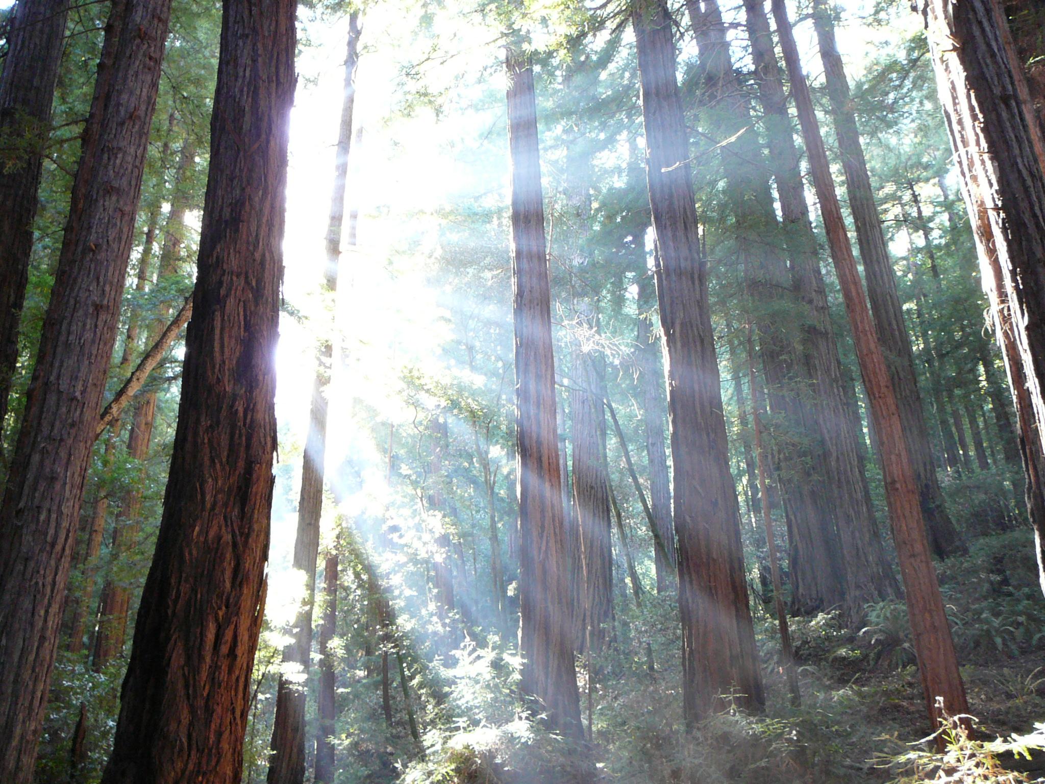 Humboldt Redwoods nasjonalpark California