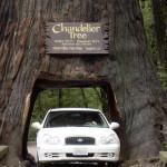 Redwood_Chandelier
